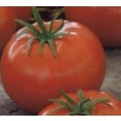 Tomate ACE 55